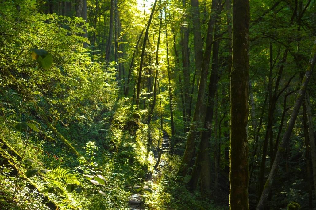 Wutachtal Wald