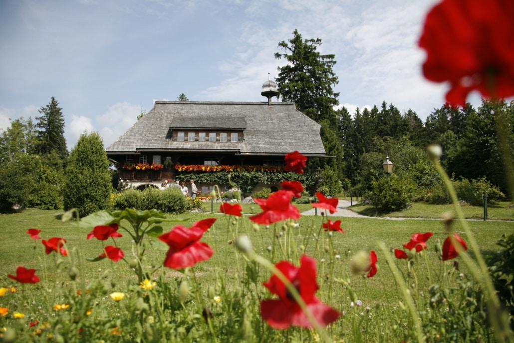 Blumenwiese im Schwarzwald - Pfingsten