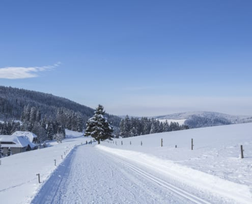 winter hiking trail and cross country ski trail 495x400 - Kurzurlaub im Schwarzwald - Arrangements Hotel Restaurant Lindenhof
