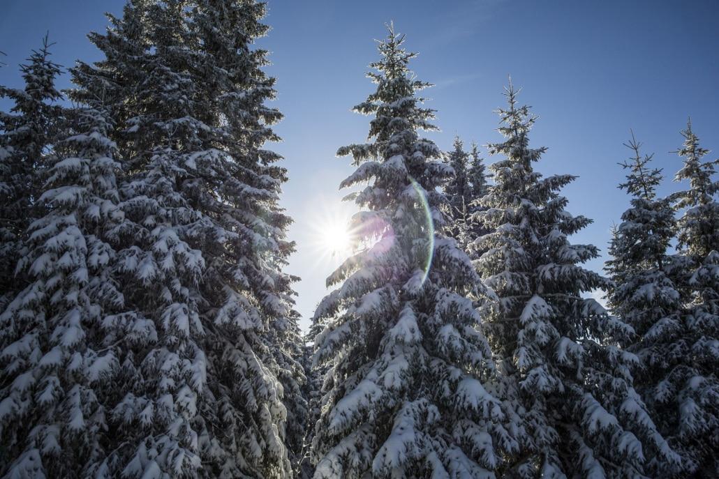 Winterwald am Herzogenhorn High Res 3078 1030x687 - Menüs zum Abholen